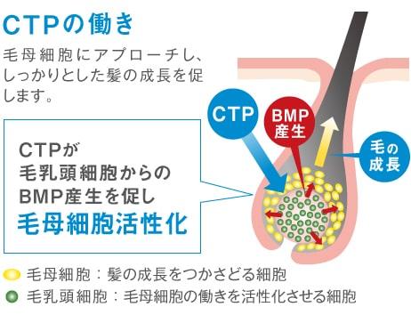 CTPの働きの説明図